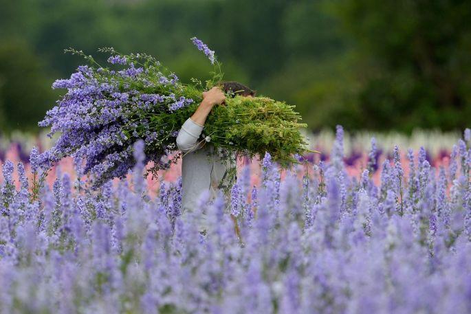 Ngỡ ngàng vẻ đẹp thiên đường hoa mùa hè chỉ mở cửa 7 ngày mỗi năm - ảnh 5