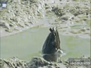 Phi thường - kỳ quặc - Tranh cãi quanh sinh vật bí ẩn thò đầu khổng lồ lên mặt sông