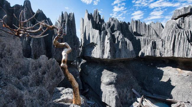 Kỳ quan rừng đá ít người có thể tới ở Madagascar - ảnh 1