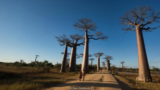 Kỳ quan rừng đá ít người có thể tới ở Madagascar - ảnh 4