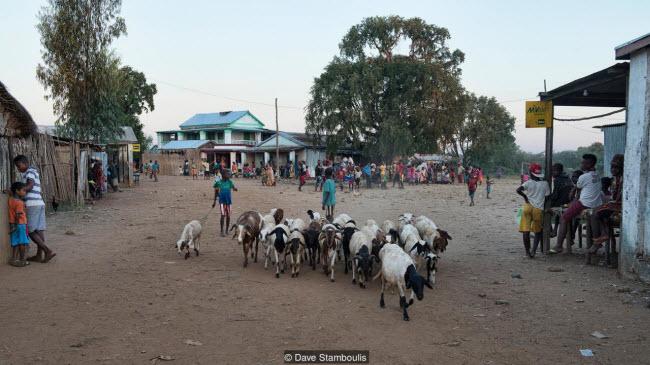 Kỳ quan rừng đá ít người có thể tới ở Madagascar - ảnh 5