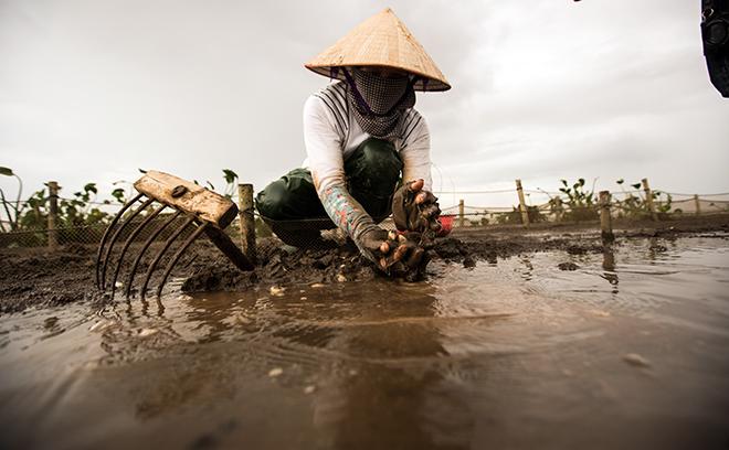 Về Đồng Châu xem cào ngao, ngắm hoàng hôn hoang hoải bên bờ biển hoang sơ - ảnh 8