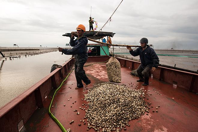 Về Đồng Châu xem cào ngao, ngắm hoàng hôn hoang hoải bên bờ biển hoang sơ - ảnh 10