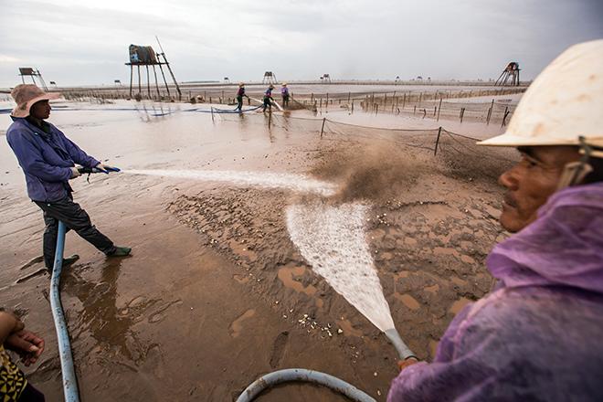 Về Đồng Châu xem cào ngao, ngắm hoàng hôn hoang hoải bên bờ biển hoang sơ - ảnh 9