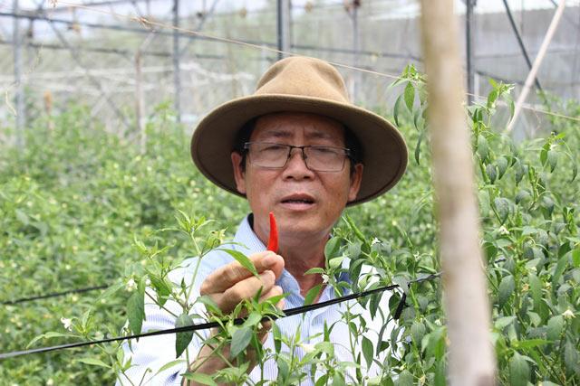 Chuyện lạ có thật: Thu chục tỷ đồng mỗi năm nhờ trồng ớt...lấy hạt - ảnh 1