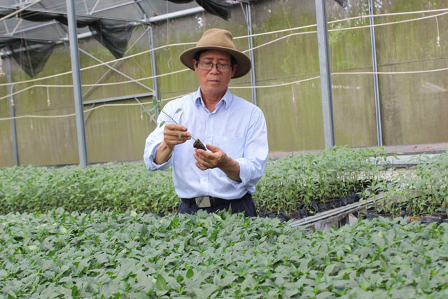Chuyện lạ có thật: Thu chục tỷ đồng mỗi năm nhờ trồng ớt...lấy hạt - ảnh 3