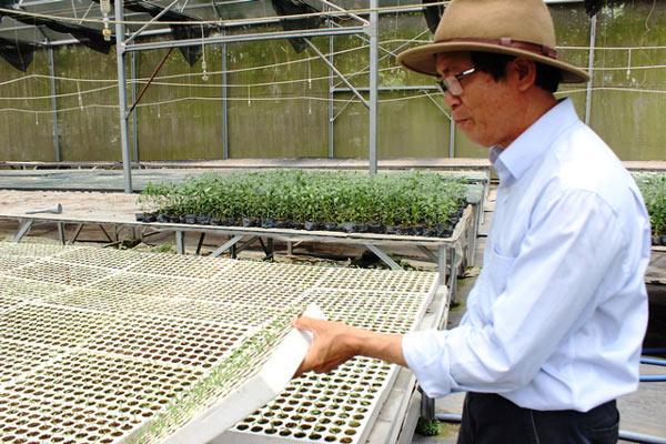 Chuyện lạ có thật: Thu chục tỷ đồng mỗi năm nhờ trồng ớt...lấy hạt - ảnh 4