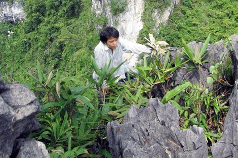 Nghề săn phong lan rừng trên vùng sơn cước - ảnh 1
