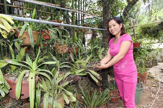 Nghề săn phong lan rừng trên vùng sơn cước - ảnh 3