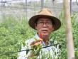 Chuyện lạ có thật: Thu chục tỷ đồng mỗi năm nhờ trồng ớt...lấy hạt