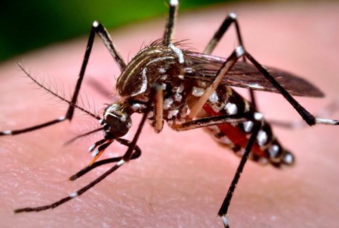 Muỗi đốt người gây sốt xuất huyết hình dáng thế nào? - 1