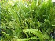 Tin tức sức khỏe - Khám phá mới:  Một loài cây thân thiện có thể giúp bạn thoát tiểu đêm cực nhẹ nhàng
