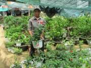 Bỏ túi  20 triệu/tháng từ trồng hoa trên đất dự án treo