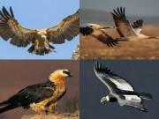 """10 loài chim bay cao nhất,  """" đua """"  cả với máy bay"""