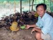 Làm giàu từ chăn nuôi: Gà thả vườn trên đệm sinh học, chưa thấy ế