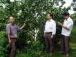 Làm giàu ở nông thôn: Lãi 2,3 tỷ từ 17,5ha cam, bưởi và 17ha rừng
