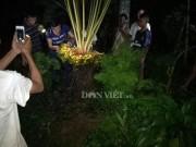 Chong đèn, giữ chó cả đêm để ngắm cây vạn tuế  đẻ  400  trứng vàng