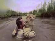 """Sư tử trên bờ  """" vồ """"  người đàn ông giữa sông và diễn biến không ngờ"""