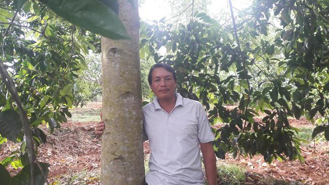 """Người thích trồng """"cột chống trời"""", mỗi cây dổi cho thu 1 cây vàng - 1"""
