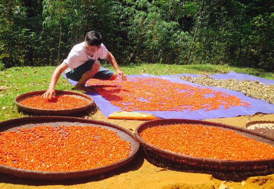 """Người thích trồng """"cột chống trời"""", mỗi cây dổi cho thu 1 cây vàng - 5"""
