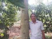 """Thị trường - Tiêu dùng - Người thích trồng """"cột chống trời"""", mỗi cây dổi cho thu 1 cây vàng"""