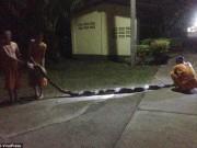 Trăn khổng lồ 8m đớp chân, siết chặt bà cụ Thái Lan