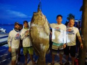 Mỹ: Lặn biển, bắt được cá mú khổng lồ to gấp đôi người
