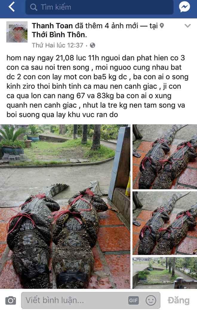 Thực hư thông tin bắt được cá sấu 83kg ở Cà Mau - 1