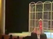 Video: Hổ cắn xé người huấn luyện trước mắt khán giả ở TQ