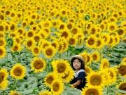 Du lịch - Du khách ùn ùn kéo đến làng hoa hướng dương đẹp sững sờ ở Hàn Quốc