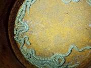 Phi thường - kỳ quặc - Hoảng hốt phát hiện 19 rắn đuôi chuông trong nhà đồ chơi của con
