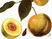 Sức khỏe đời sống - 7 bài thuốc trị tiêu chảy do ăn uống
