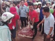 Thị trường - Tiêu dùng - Vì sao Thái Lan không phải giải cứu heo như Việt Nam?