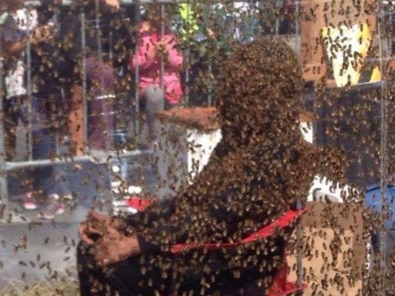 Juan Carlos Noguez Ortiz đã ngồi yên 61 phút, mặc cho lũ ong đến bám đầy người anh.