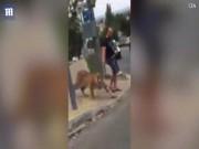 Thế giới - Rợn gáy cảnh dắt hổ dữ đi chơi giữa phố đông người ở Nga