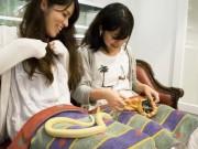 Du lịch - Rợn người với quán cà phê rắn ở Nhật Bản