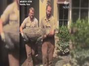"""Thế giới - Mỹ: Đóng cửa đi lánh bão, về thấy cá sấu """"khủng"""" chình ình trong nhà"""