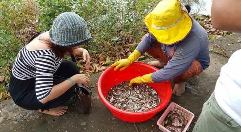 Về An Giang ăn cá linh trên đồng nước nổi - 11