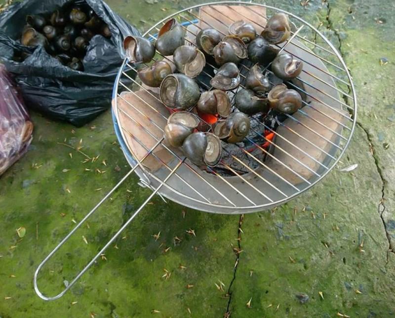 Về An Giang ăn cá linh trên đồng nước nổi - 9