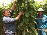 Thị trường - Tiêu dùng - Anh nông dân bắt tay với 1.000 nông hộ để tạo doanh thu 1 tỷ/ngày