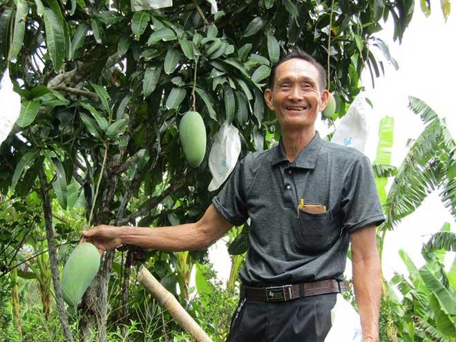 Bỏ mía trồng bông súng, cây ăn trái, lãi hơn 400 triệu đồng/năm