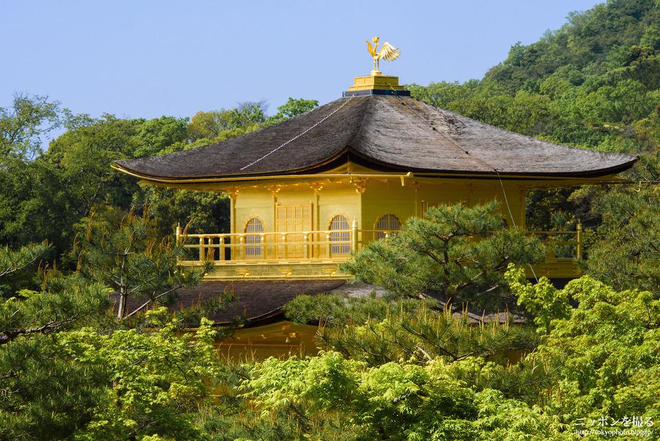 Choáng ngợp ngôi chùa được dát bằng vàng thật ở Nhật Bản - 4