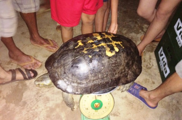 """Thả cụ rùa trăm tuổi về với tự nhiên vì sợ tháng """"cô hồn"""" - 1"""