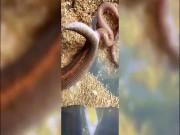 Thế giới - Video trăn sinh con khiến người xem rợn tóc gáy