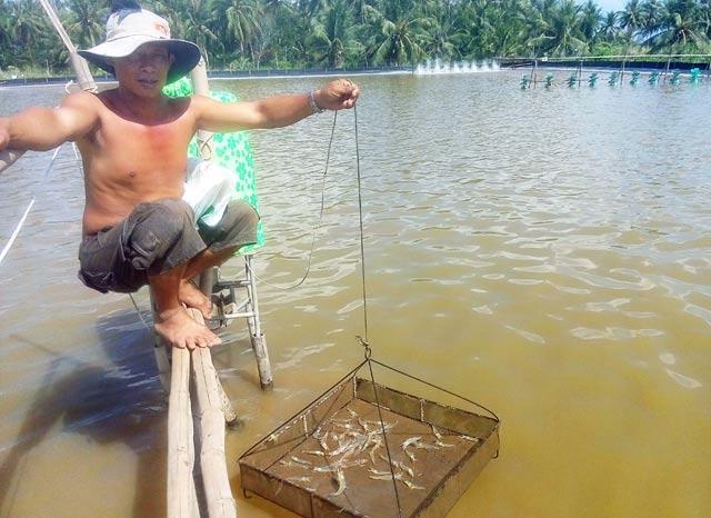 <span>Làm giàu ở nông thôn: Trồng 700 cây dừa 2 tuổi, thu 15 triệu/tháng</span>