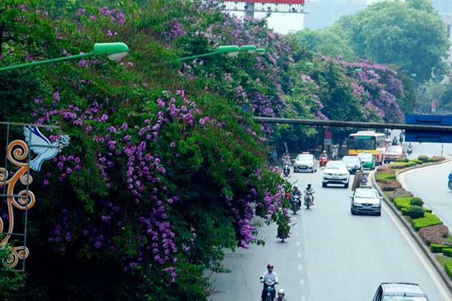 HN: Tiếp tục chặt hạ, di chuyển 130 cây xanh trên đường Kim Mã - 1