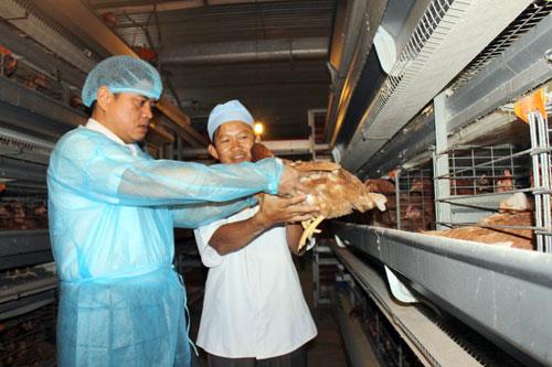 Sau lô gà Việt đầu tiên đi Nhật, tiềm năng xuất khẩu rộng mở - 1