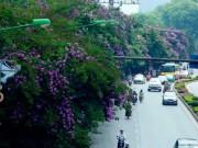 Tin tức trong ngày - HN: Tiếp tục chặt hạ, di chuyển 130 cây xanh trên đường Kim Mã