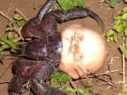 Phi thường - kỳ quặc - Rùng mình sinh vật dùng đầu búp bê làm vỏ, kéo đi khắp nơi