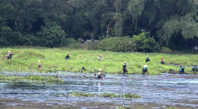 """Độc đáo lễ hội """"phá trằm"""" lội bùn bắt cá ở Quảng Trị - 4"""